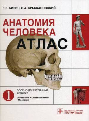 Download Anatomiya cheloveka pdf
