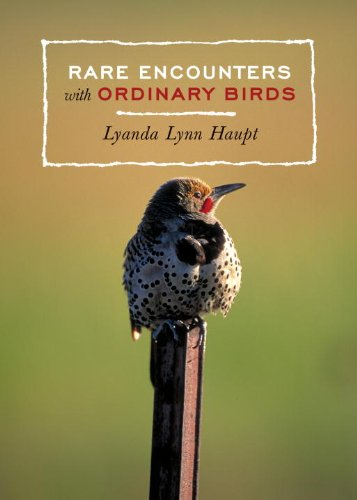 (Rare Encounters with Ordinary Birds)