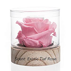Sustainable Home Scent 12oz A Real Fragrance Flower with Lasting abilities Similar to Scented Candle, Wax and Aroma Diffuser 82