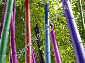 (Promotion 50 seeds / bag 5 colors Bamboo Seeds, Bonsai moso tree plant, sprouting rate 95%, factory)