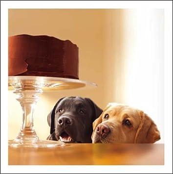 Woodmansterne Blank Birthday Card