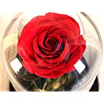 Nalosun-Beauty-and-The-Beast-Red-Rose-Enchanted-Red-Real-Rose-Handmade-Preserved-Rose-in-Glass-Dome-on-a-Wooden-Base-Best-Gift-for-HerMothers-Day-Valentines-Day-Wedding-Anniversary
