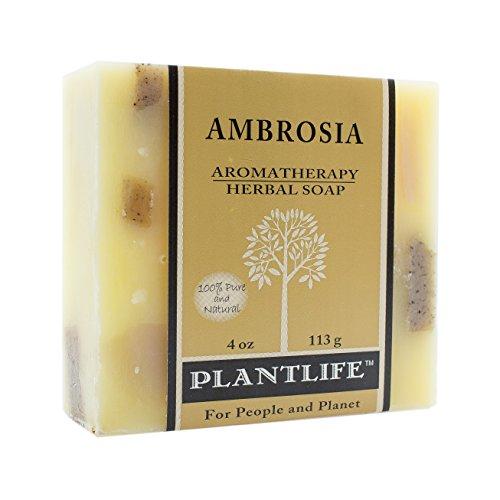 Ambrosia Plant - 5