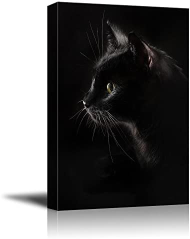 Black Cat with Dark Background