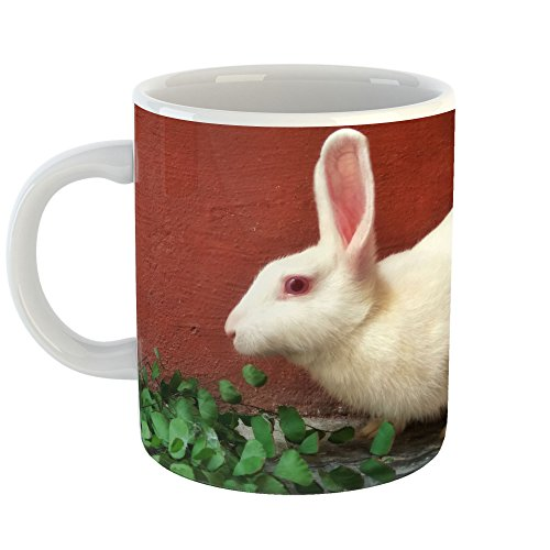 Westlake Art - Rabbit Domestic - 11oz Coffee Cup Mug - Modern Picture Photography Artwork Home Office Birthday Gift - 11 Ounce (Am Domestic Cleaner)