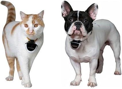 eyeanimal – Cámara para gatos y perros: Amazon.es: Productos para ...