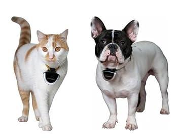 eyeanimal - Cámara para gatos y perros: Amazon.es: Productos para mascotas