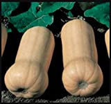 Waltham Butternut Winter Squash, 50+ Premium Heirloom Seeds, Fantastic Addition to Your Home Garden! (Isla's Garden Seeds), Non GMO, 85% Germination Rates, Highest Quality Seeds