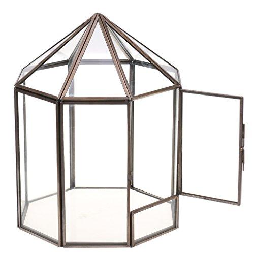 Dolity Casa Invernadero de Vidrio Claro Forma Carpa para Suculentas Micro Plant Paisaje