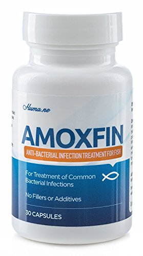 AMOXFIN (500mg / 30 Capsules) for Fish