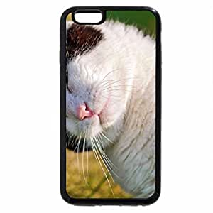iPhone 6S Plus Case, iPhone 6 Plus Case, A Small Kiss