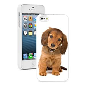 Apple iPhone 5c Hard Back Case Cover Color Dachshund Pattern Striped Sweater (Black)