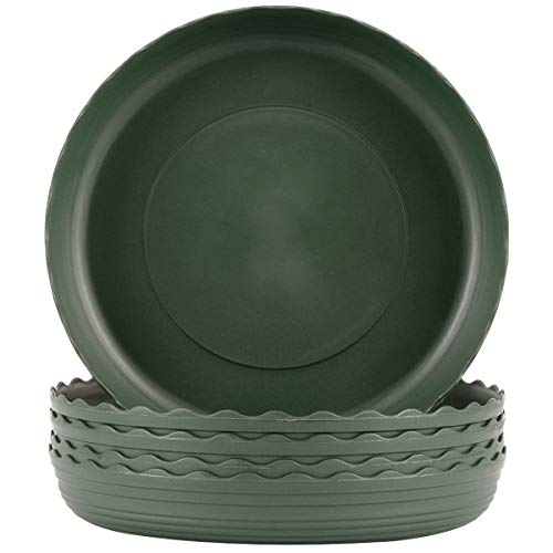 Plant Saucer 6 inch