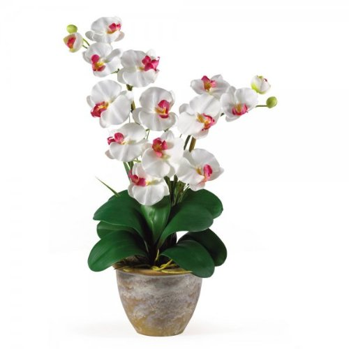 Double Phalaenopsis Orchid Arrangement (White) (25''H x 15.5''W x 12''D) by Nearly Natural