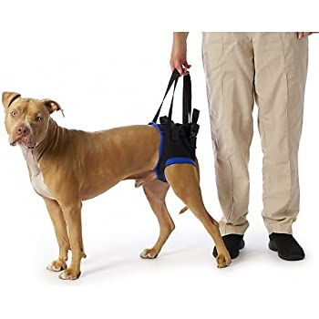 Amazon.com : Walkabout Back Pet Harness Small : Pet Halter Harnesses