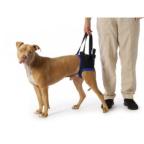 walkabout-back-pet-harness-large