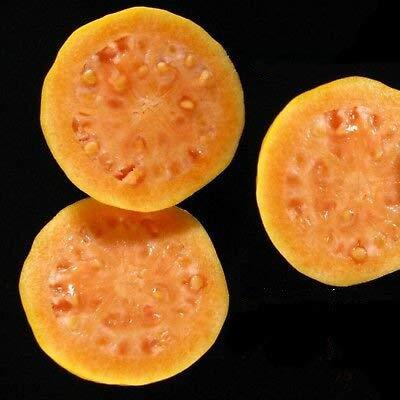 3 Fruit Sweet Psidium Guajava Orange Flesh Guava Fruit Tree Small Potd Plant by MANGO (Image #2)