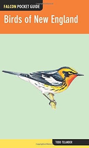 Birds of New England (Falcon Pocket Guides) (Birds New England)