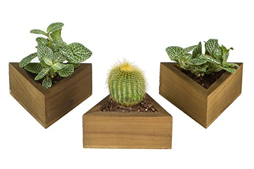 Royal Gardens Set of 3 Small Planter Pot Containers for Succulents, Air Plants, Cacti, and Other Small Greenery (Triangle, Dark)