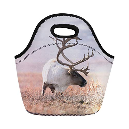 Semtomn Neoprene Lunch Tote Bag Wildlife Big Caribou in Alaska Tundra Denali Yukon Alaskan Reusable Cooler Bags Insulated Thermal Picnic Handbag for Travel,School,Outdoors, Work