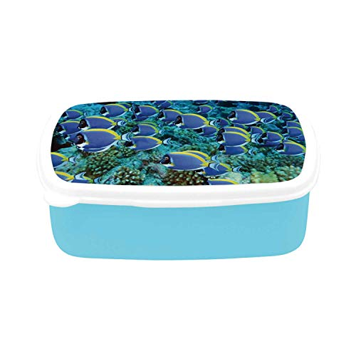 - Ocean Simple Plastic Lunch Containers,School of Powder Blue Tang Fishes in the Coral Reef Maldives Deep Seas for home,7.09