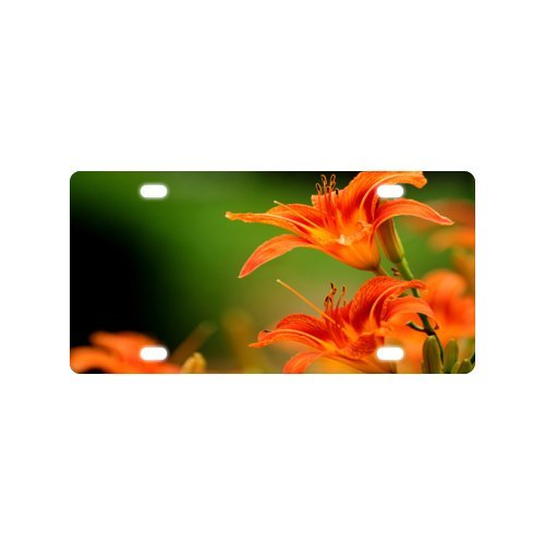 Lily License Plate with Personalized and Novelty -12
