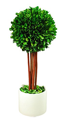 Galt International B0721 Ball Topiary Plant with Twig Stem in White Pot, 16.5'' Naturally Preserved Real Boxwood by Galt International