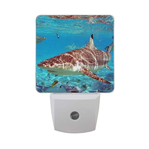 Night Light Shark Shallow Water Led Light Lamp for Hallway, Kitchen, Bathroom, Bedroom, Stairs, DaylightWhite, Bedroom, Compact by OuLian