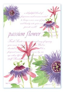 Fresh Scents Scented Sachets - Passion Flower, Lot of 2 WillowBrook FS200110