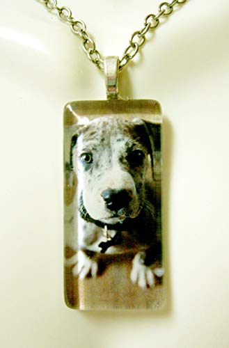 Harlequin Great Dane puppy glass pendant - -