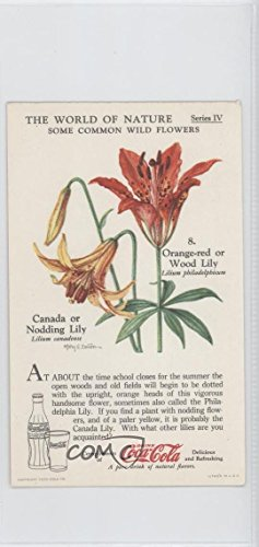 - Orange-red or Wood Lily (Trading Card) 1930s Coca-Cola The World of Nature - Series IV: Some Common Wild Flowers #8