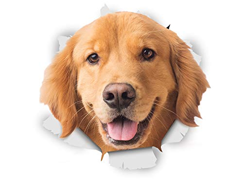 Winston & Bear 3D Dog Stickers - 2 Pack - Happy Golden Retriever Decals for Wall - Fridge - Toilet - Room - Retail Packaged Golden Retriever Dog Stickers (Best Looking Golden Retriever)