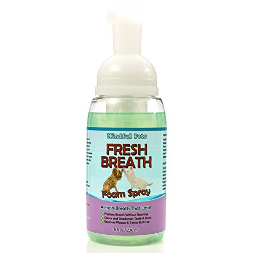 Best Solution For Dog Breath