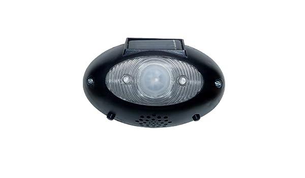 Homebrite EyeWatch SolarPowered EW1 inalámbrico fuera de seguridad detector de movimiento: Amazon.es: Juguetes y juegos