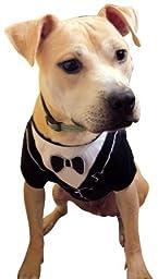 Dog Tuxedo, Frenchie Mini Couture (Medium)