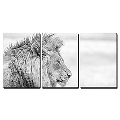 Handsome Object of Art, Classic Artwork, Side Profile of a Lion in Black and White in The Kruger National Park South Africa x3 Panels