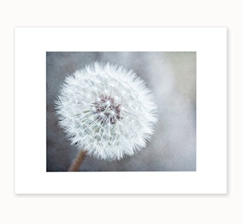 Dandelion Flower Picture Wall Art, Neutral Grey Floral Wall Decor, 8x10 Matted Photographic Print 'Dandelion King'