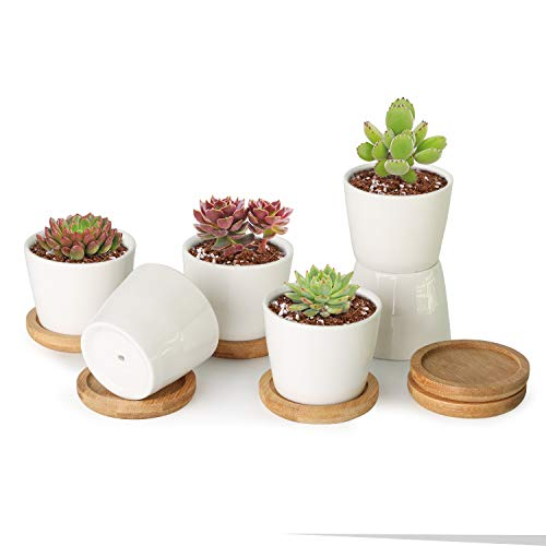 T4U 2.5 Inch Small White Succulent Planter Pots with Bamboo Tray Round Set of 6, Ceramic Succulent Air Plant Flower Pots…