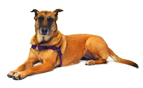 SENSE-ation No-Pull Dog Harness - Purple by Softouch: Amazon.es: Hogar