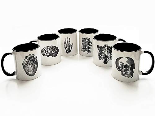 six Anatomy coffee Mugs gift set skull anatomical heart brain vertebrae hand doctor nurse medical]()