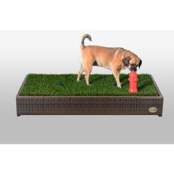 Best Indoor Dog Potty Medium Dogs