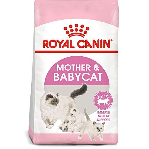 feline health nutrition mother babycat