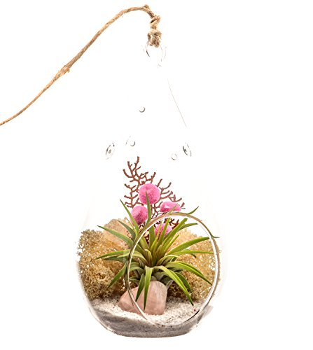 Bliss Gardens Air Plant Terrarium with Rose Quartz/7'' Teardrop Glass/Pretty Pink Countryside by Bliss Gardens