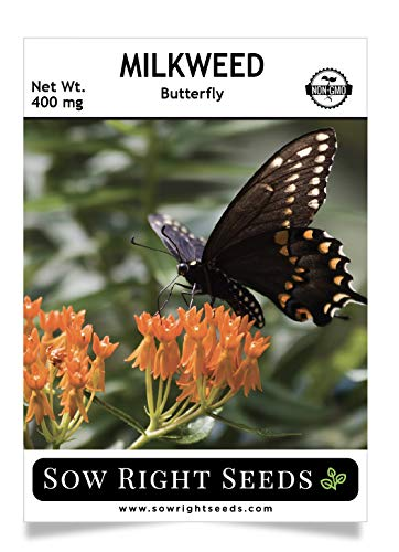 - Sow Right Seeds Butterfly Milkweed Seeds; Attract Monarch and Other Butterflies to Your Garden; Non-GMO Heirloom Seeds; Full Instructions for Planting, Wonderful Gardening Gift (1)