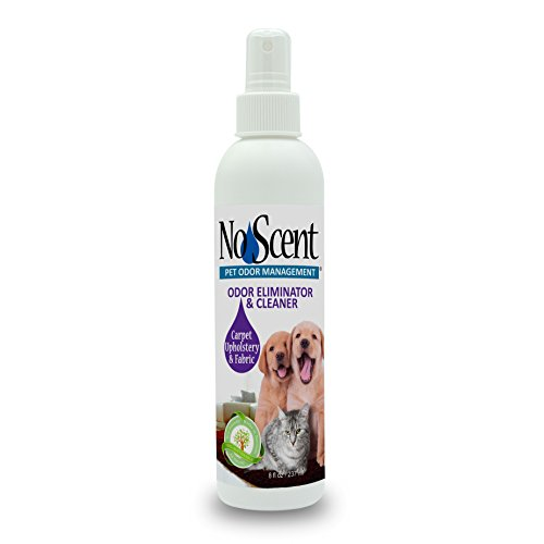 No Scent Carpet Upholstery & Fabric - Professional Pet Urine Feces Odor Eliminator & Cleaner - Safe All Natural Probiotic & Enzyme Formula Smell Remover Furniture Mattress Rug Clothes (8 oz)