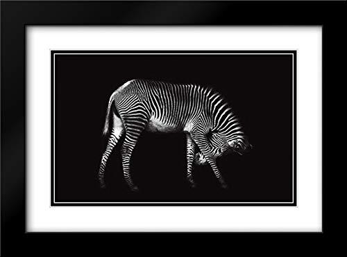 Zebra Solo 40x27 Black Modern Frame and Double Matted Art Print by Ortega, Xavier
