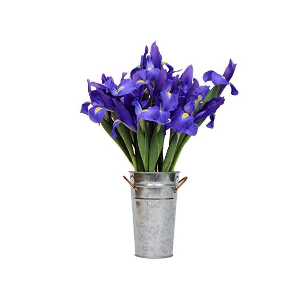 Stargazer-Barn-Fresh-Bouquet-Of-Telstar-Iris-With-Vase-Direct-From-Farm