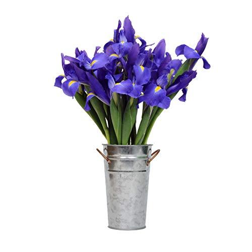 Stargazer Barn - Telstar Iris Bouquet with Vase