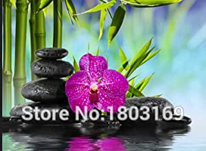 1000PCS novedosa planta bonsái iris mariposa semillas de la orquídea Phalaenopsis flores Semillas de flores Orquídea Semilla Inicio Jardín