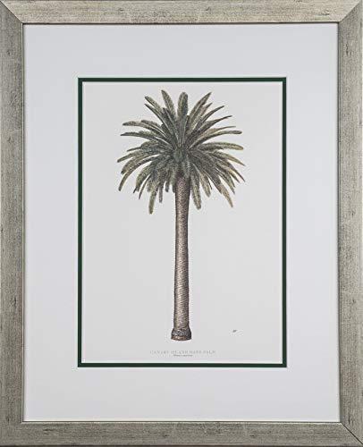 Seven North Art Peebles, Diane Canary Island Date Palm (Phoenix canariensis) 26x18 1 of Set of 6